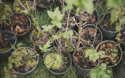 Tree Planting Projects Kick Off Around Puget Sound