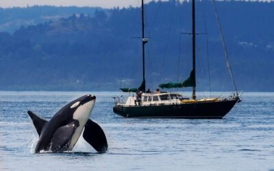 Orca Recovery Day Collective Impact